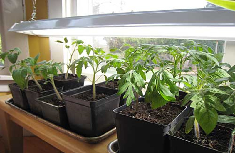 seeds germination window south facing