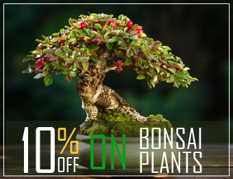 Bonsai shop online