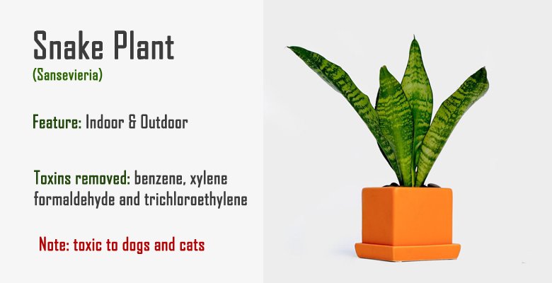 snake plant air purify