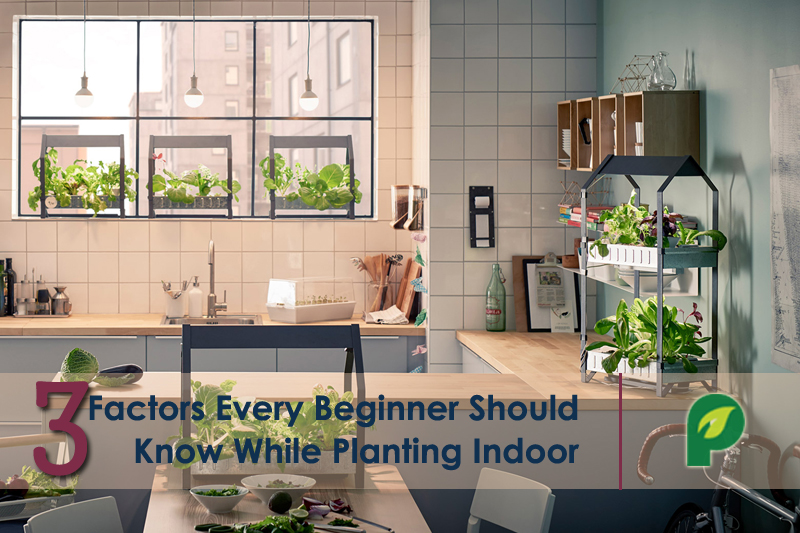 indoor gardening tips