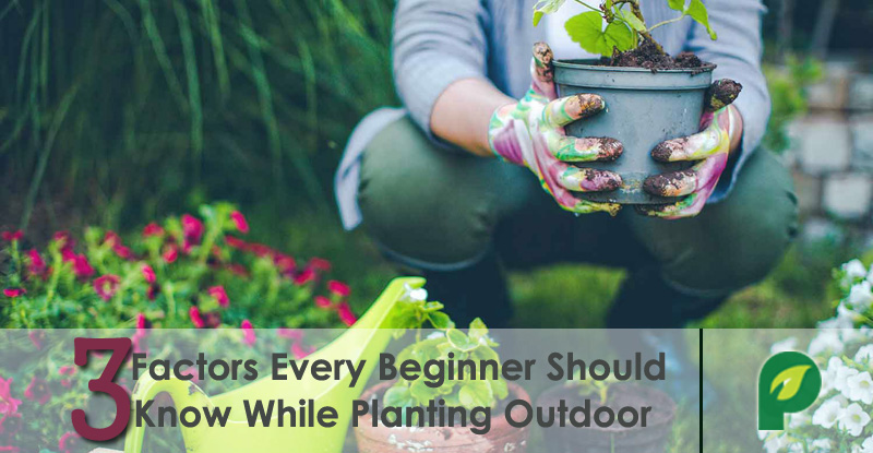 outdoor garding tips